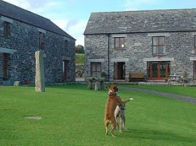 Dog Friendly Accommodation Camelford | Pet weclome here